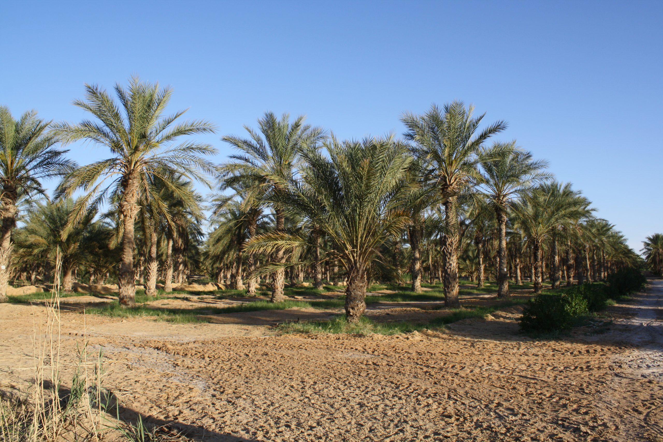 L'innovation dans le domaine des semences et plants en Algérie