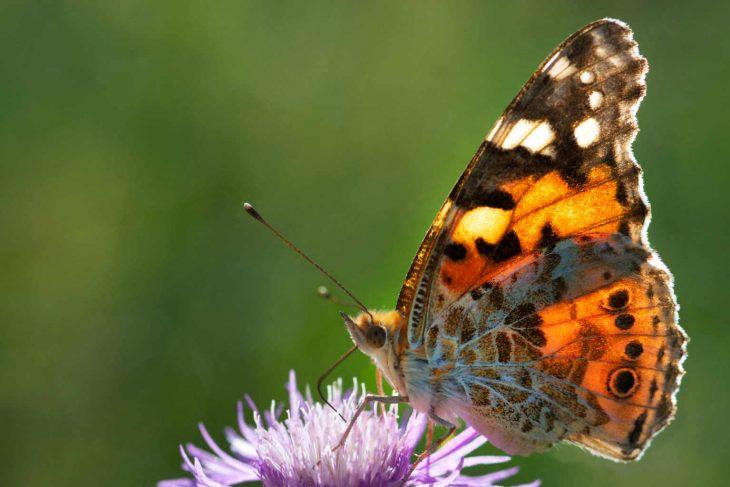 Atelier sur la stratégie nationale de conservation de la diversité des pollinisateurs
